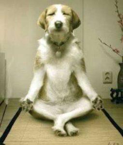 chien qui medite 255x300 - La conscience de sagesse