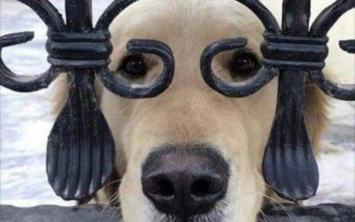 chien à lunettes 400x250 - Blog